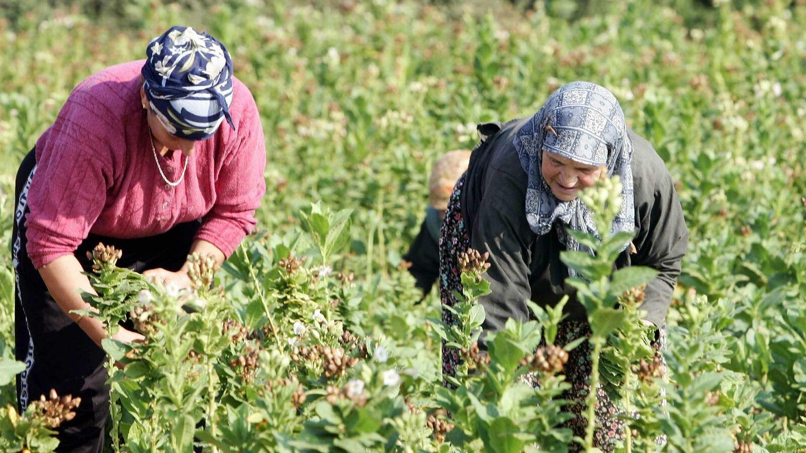 «Διεθνής Ημέρα Αγρότισσας»: Η Αγρότισσα στην Ελληνική ύπαιθρο. Γράφει ο Λευτέρης Αυγενάκης