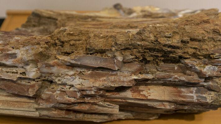 Από το απολιθωμένο δάσος στη Λέσβο (φωτό αρχείου)