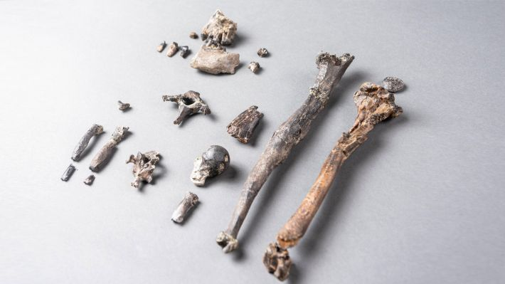 Τα απολιθωμένα οστά του Δανούβιου
