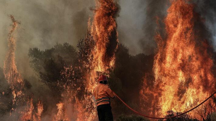 Από την φετινή πυρκαγιά στις Κεχριές Κορινθίας