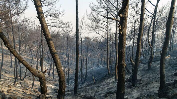 Από την πρόσφατη πυρκαγιά στη Ρόδο